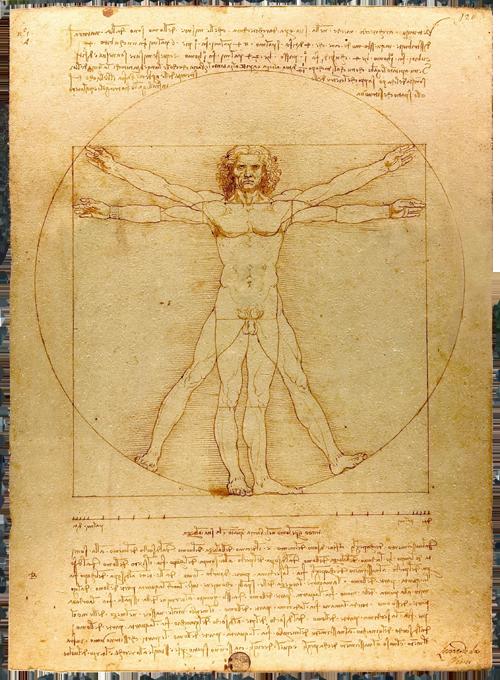 Léonard de Vinci : l'homme de Vitruve, 1485-1490