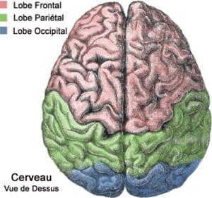 cerveau vu du ciel